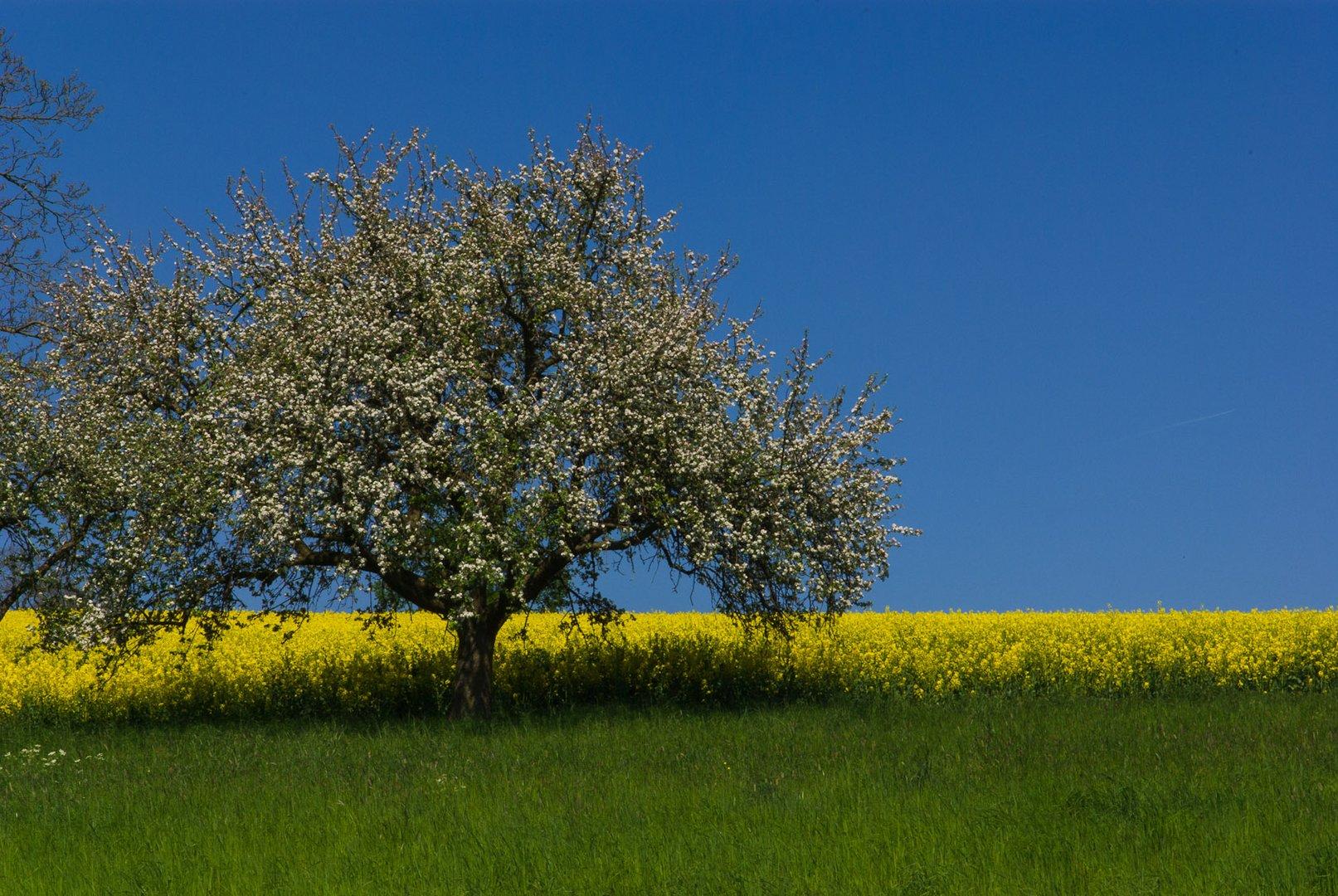 Frühling (kommt bald)