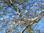 Frühling kontra Winter