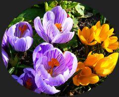 Frühling lässt grüßen (1)