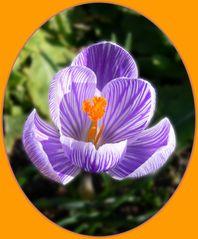 Frühling lässt grüßen (2)