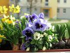 Frühling lässt grüßen