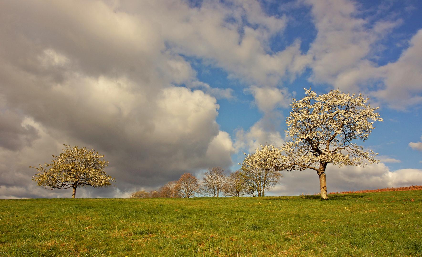 Frühling lässt grüßen,.....