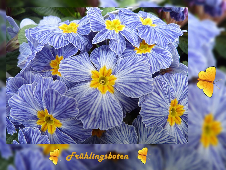 """ Frühling läßt sein blaues Band......."""