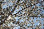 """Frühling lässt sein blaues Band"" ....."