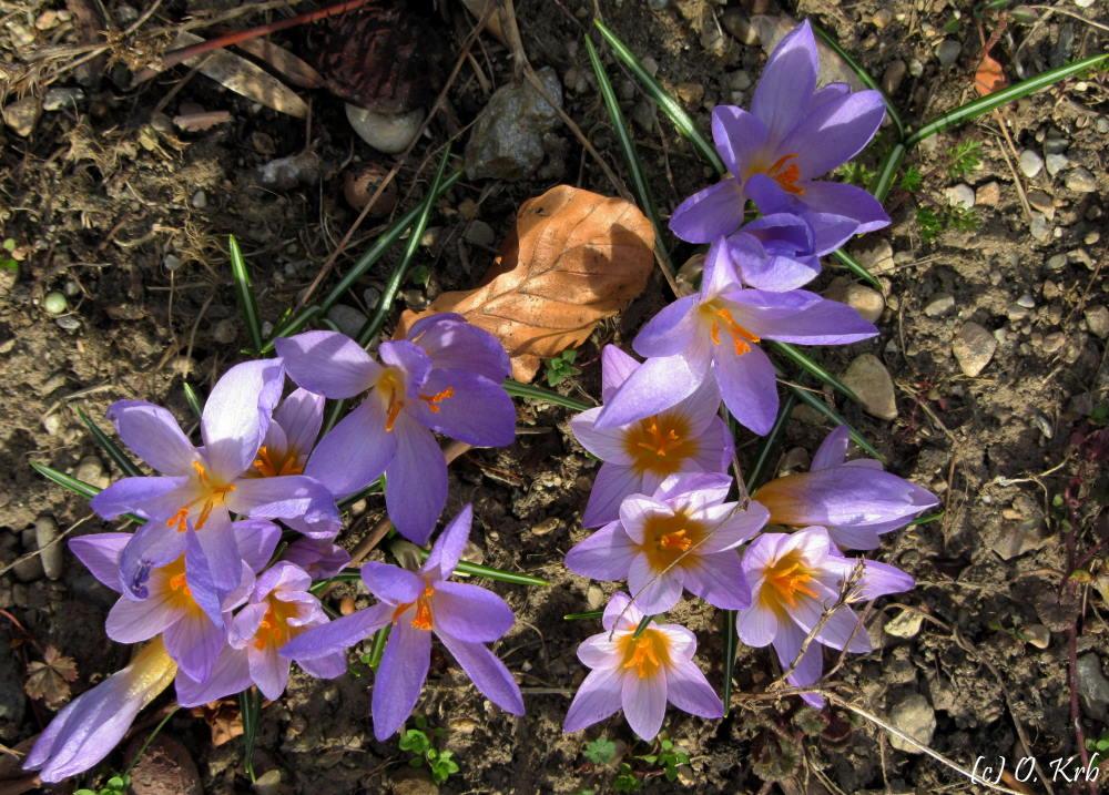 Frühling lässt sein blaues Band....