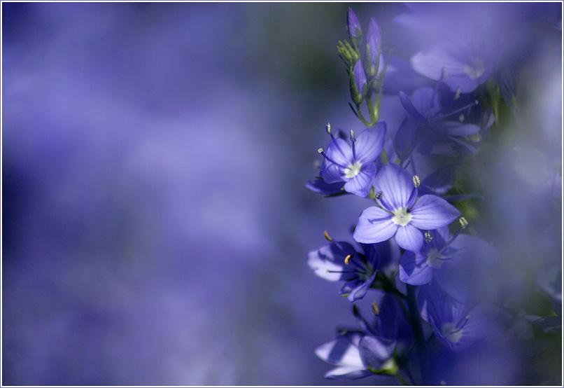 Frühling lässt sein blaues Band wieder flattern durch die Lüfte...