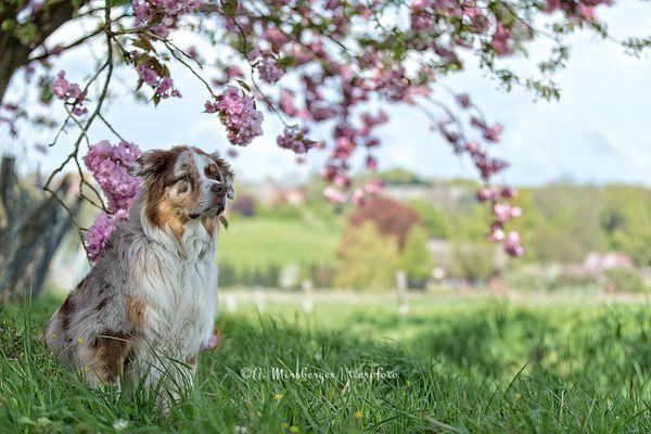 Frühling liegt in der Luft...