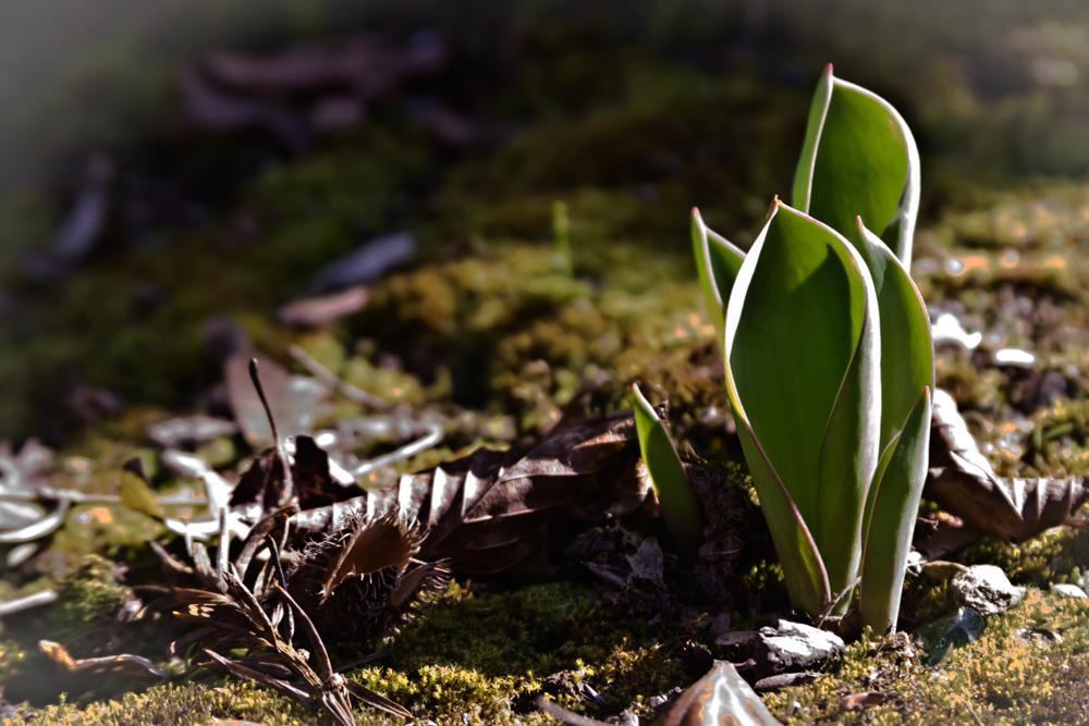 Frühling liegt in der Luft ....
