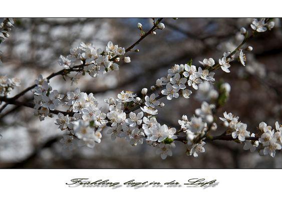 >Frühling liegt in der Luft