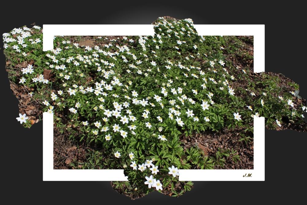 Frühling macht sich breit