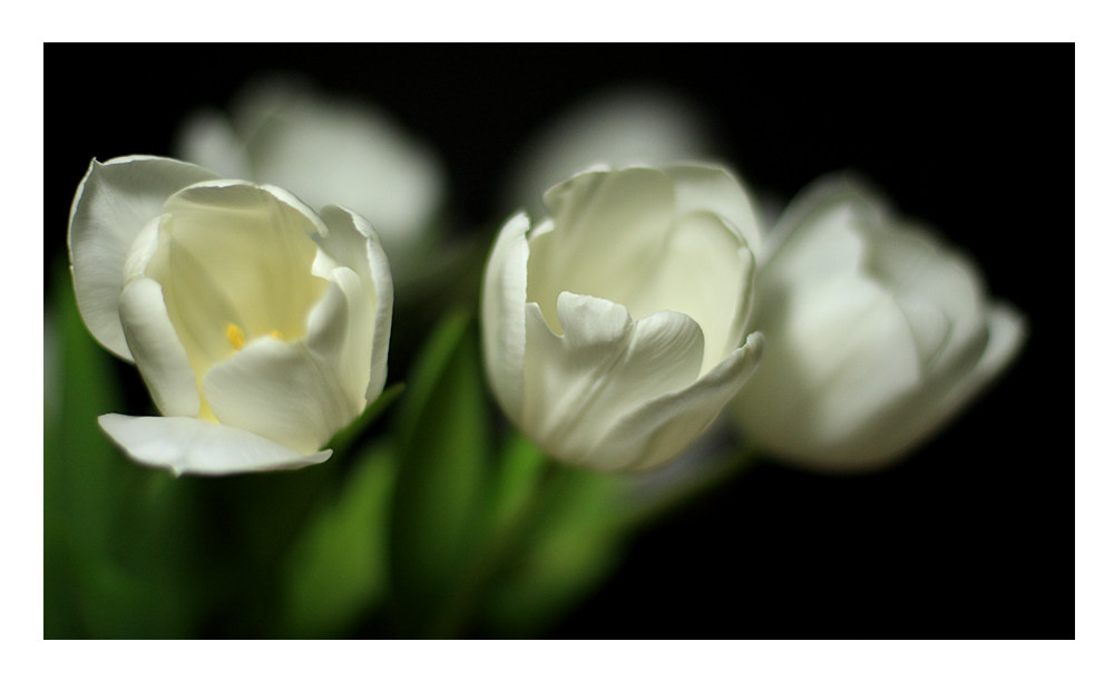 Frühling mit Blende 1,8