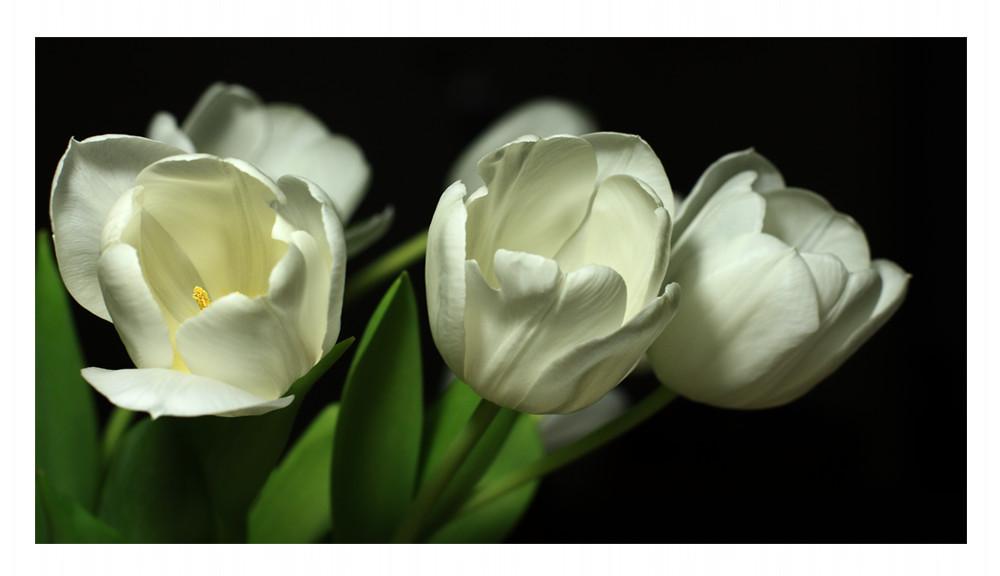 Frühling mit Blende 8