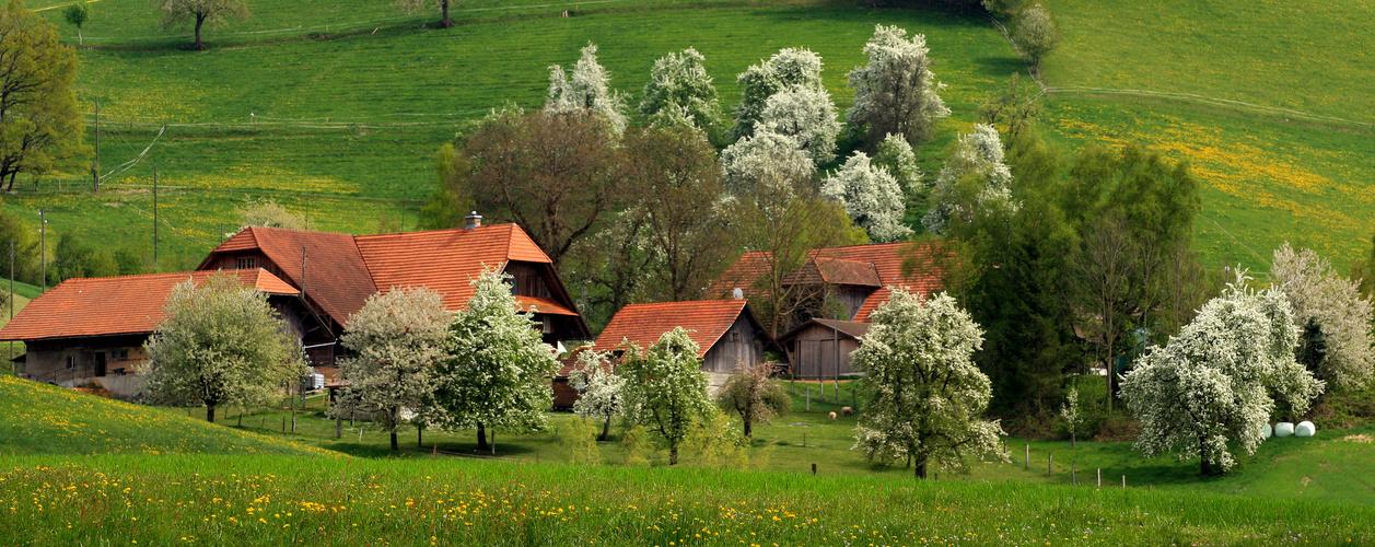 Frühling - Natur pur