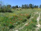 Frühling Nordzypern