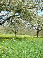 Frühling Obstbäume