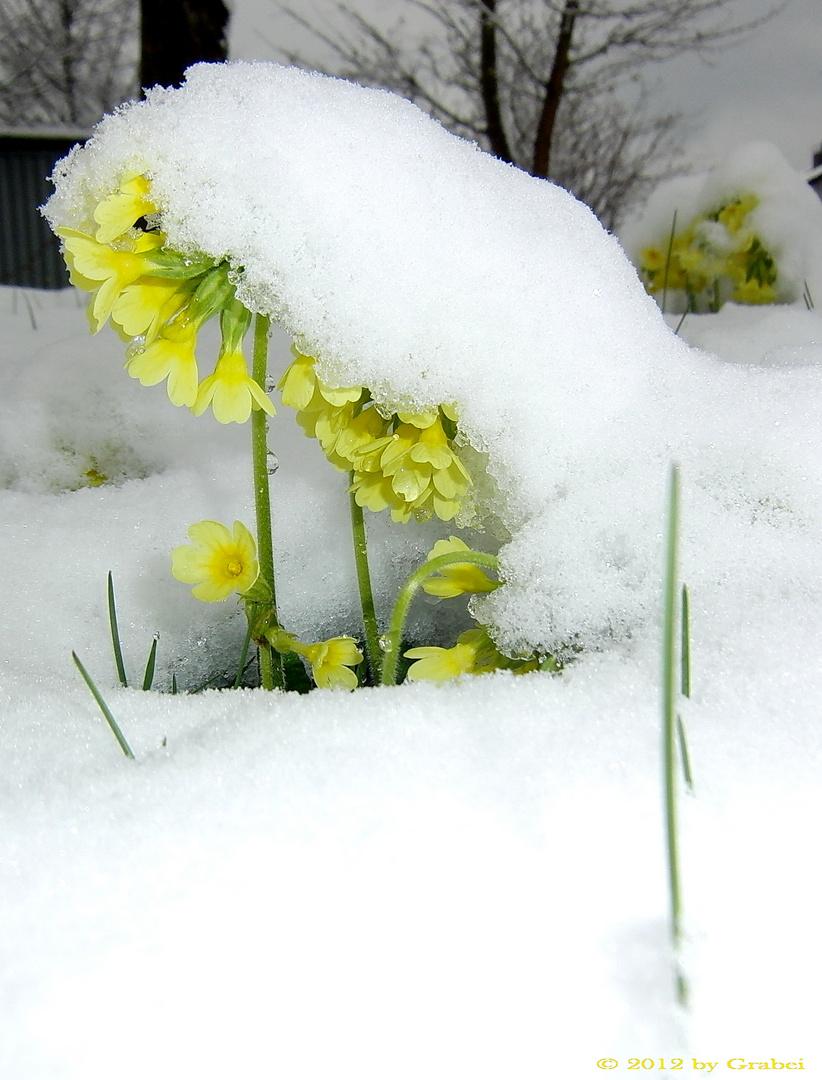 Frühling oder Winter??