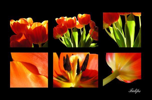 Frühling - Postkarte
