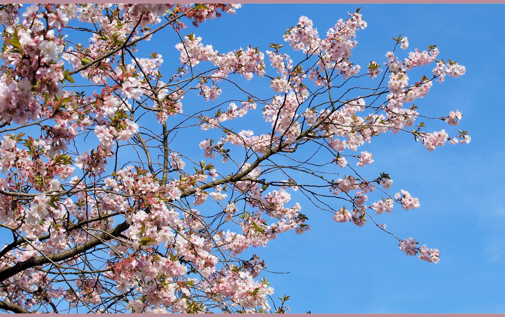 Frühling pur....