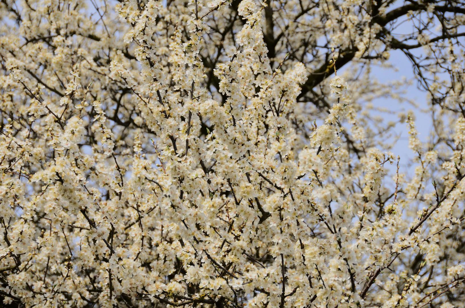 Frühling pur .....