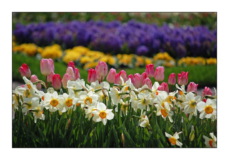 Frühling pur ! (Nr.4)