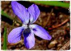Frühling - Schmeichelei der Farben   (2)