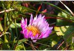 Frühling - Schmeichelei der Farben   (3)