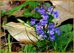 Frühling - Schmeichelei der Farben . (8)