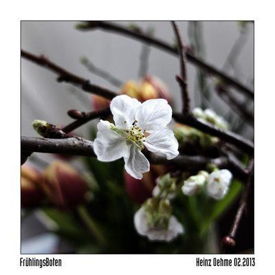 Frühling selbstgemacht ...