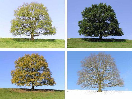 Frühling, Sommer, Herbst oder Winter?