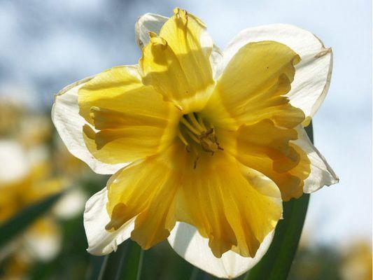 Frühling, Sonne und Wärme