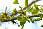 Frühling, spring, vår