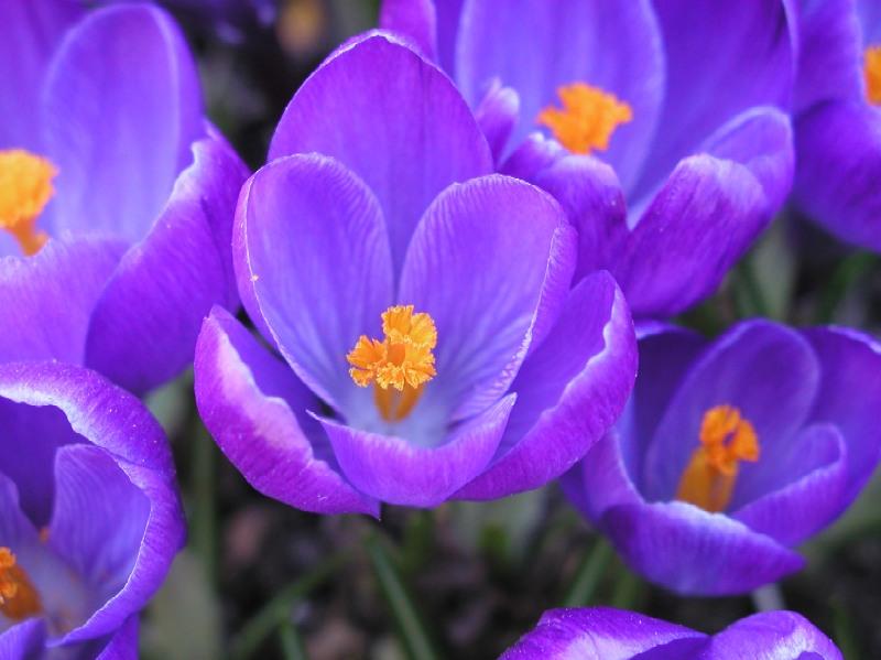 ~~~Frühling Teil 2~~~