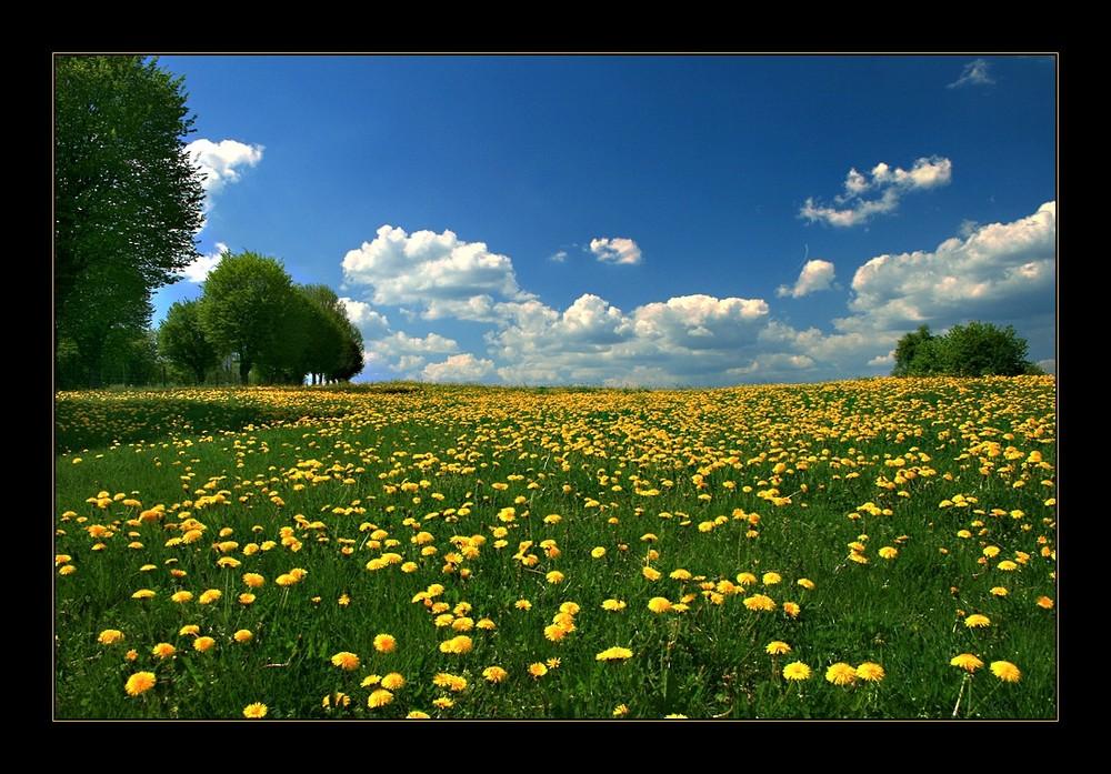 -Frühling und ... -2-