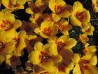 # Frühling und...#