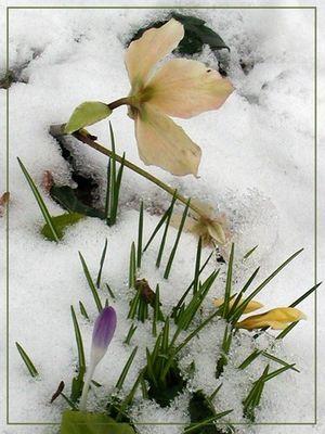 Frühling und Winter