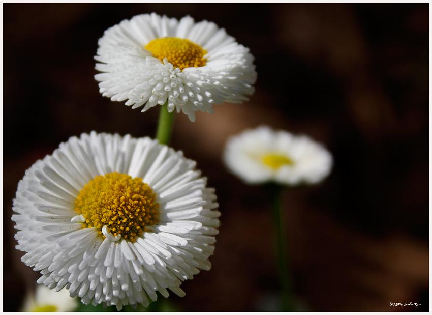 Frühling V