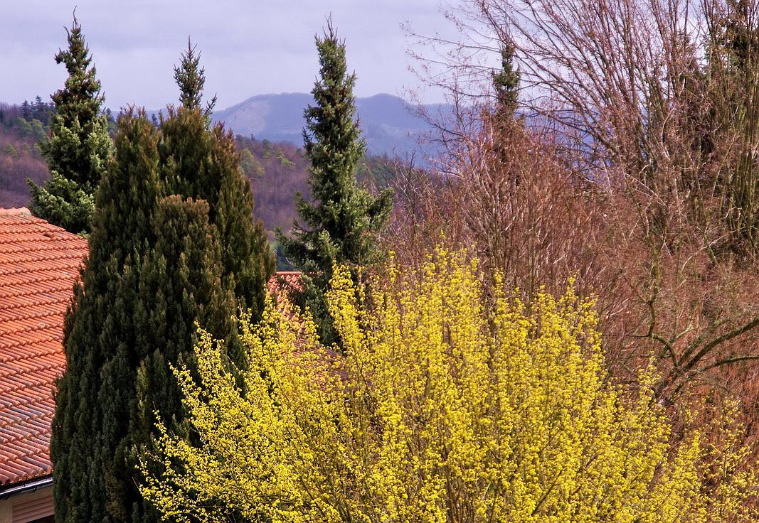 Frühling vor meinem Fenster