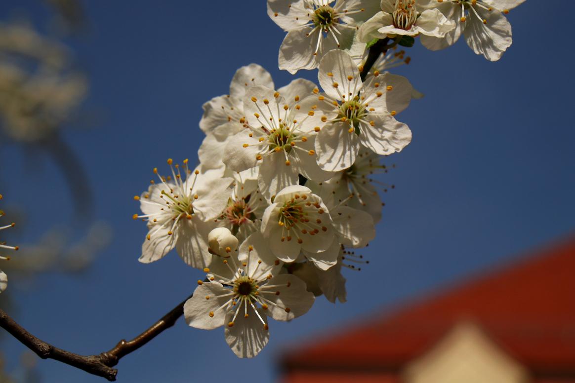 Frühling vorm Haus