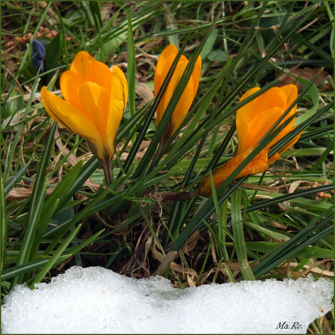 Frühling vs. Winter