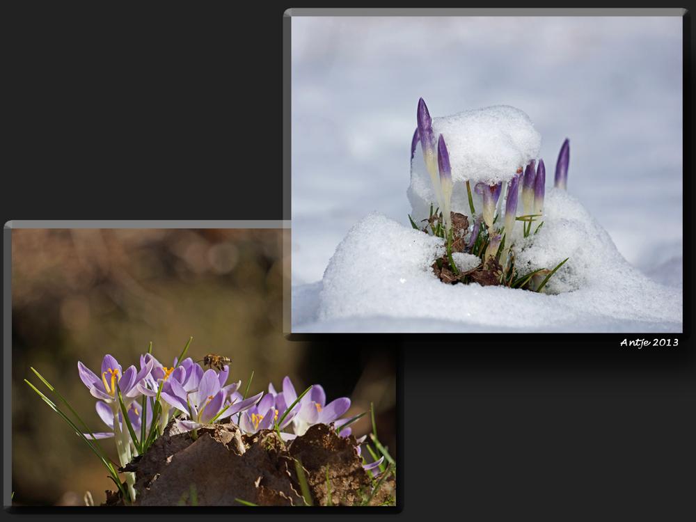 Frühling - Winter