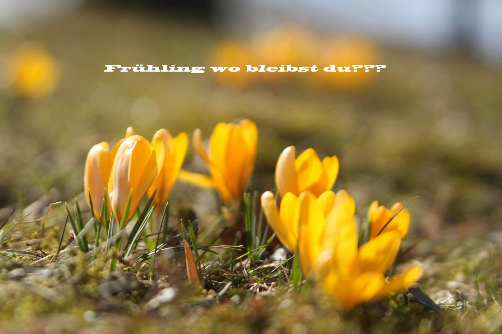 Frühling wo bleibst du?