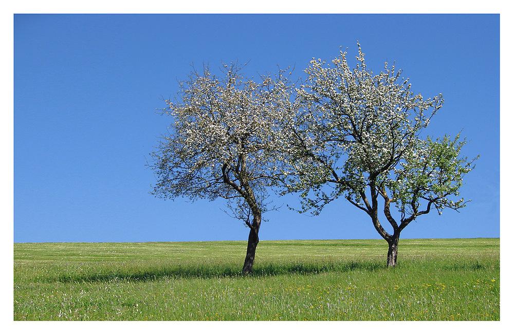Frühling zu zweit