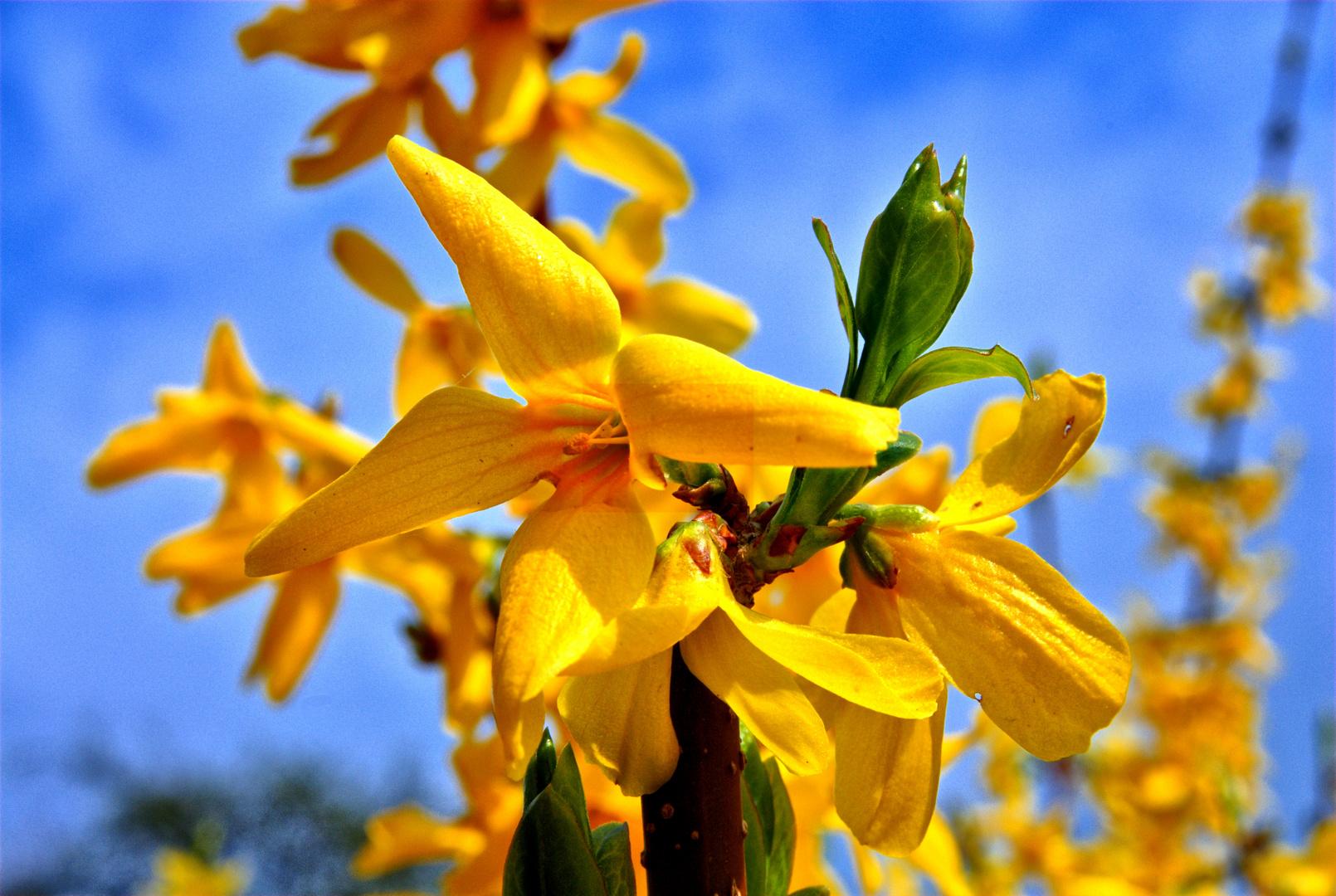 Frühling#1