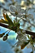 Frühling#2