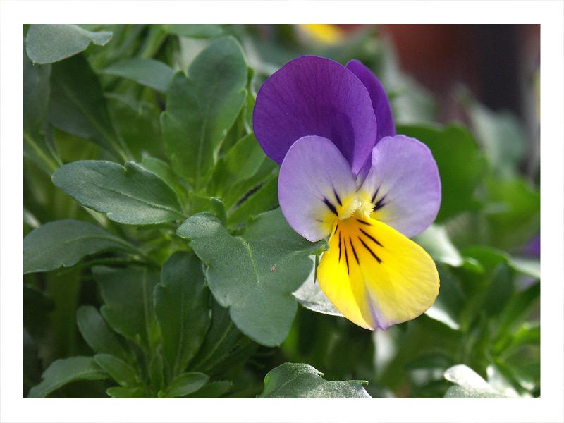 Frühling_2