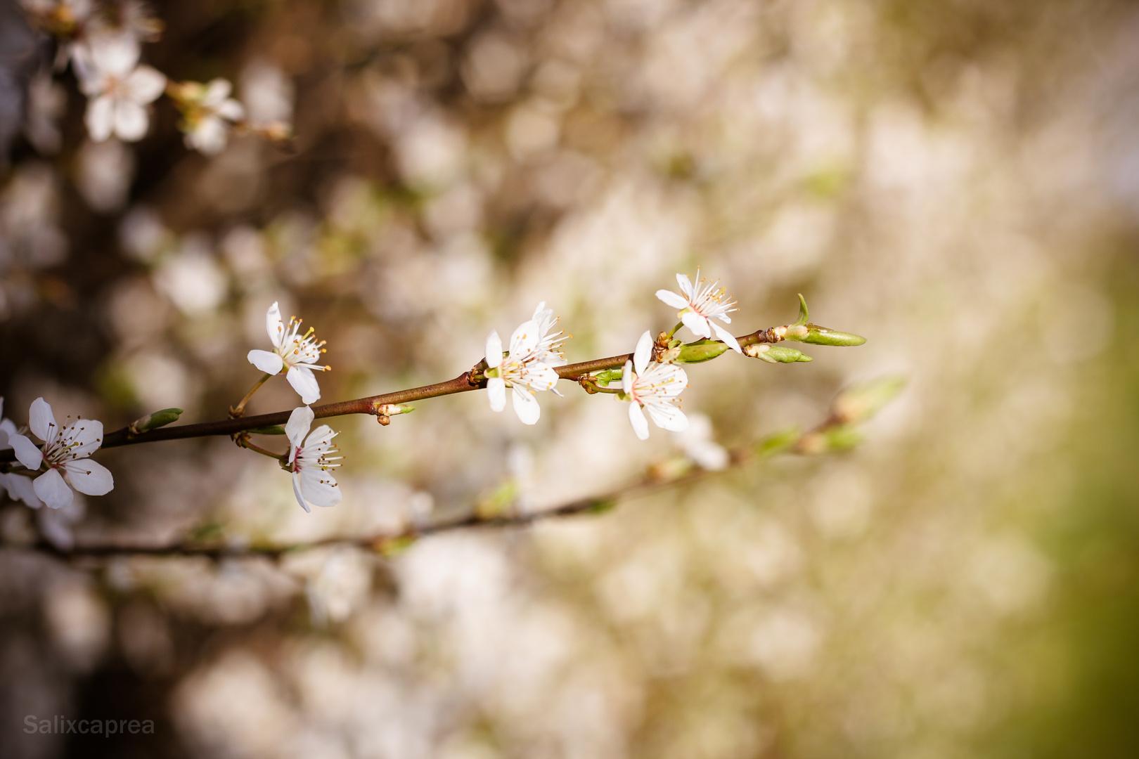 Frühling................ab morgen