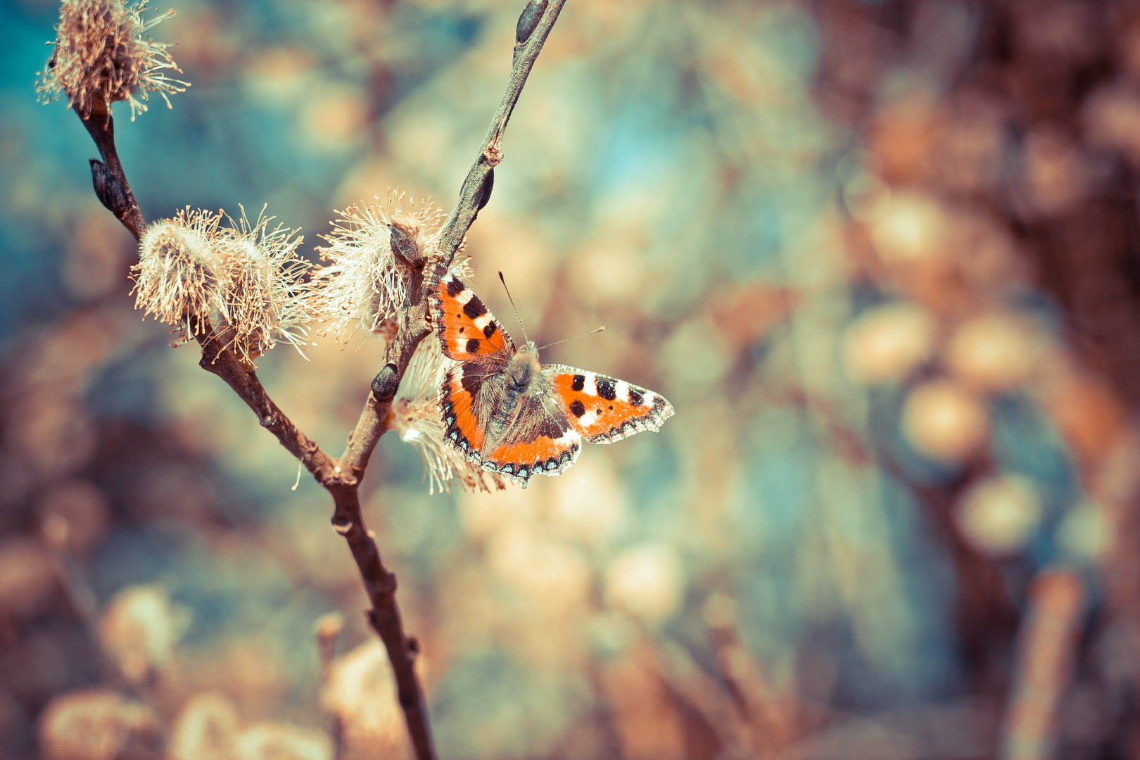 Frühling................ab morgen.........endlich