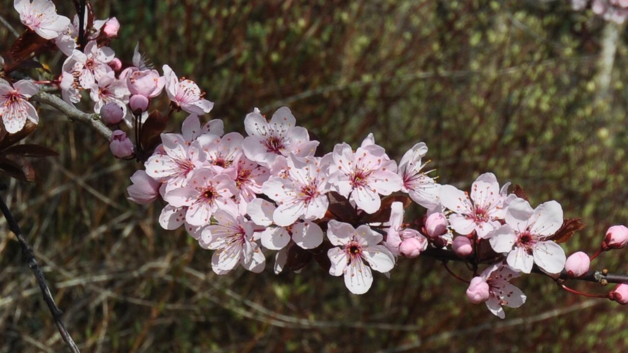 Frühlingblüte