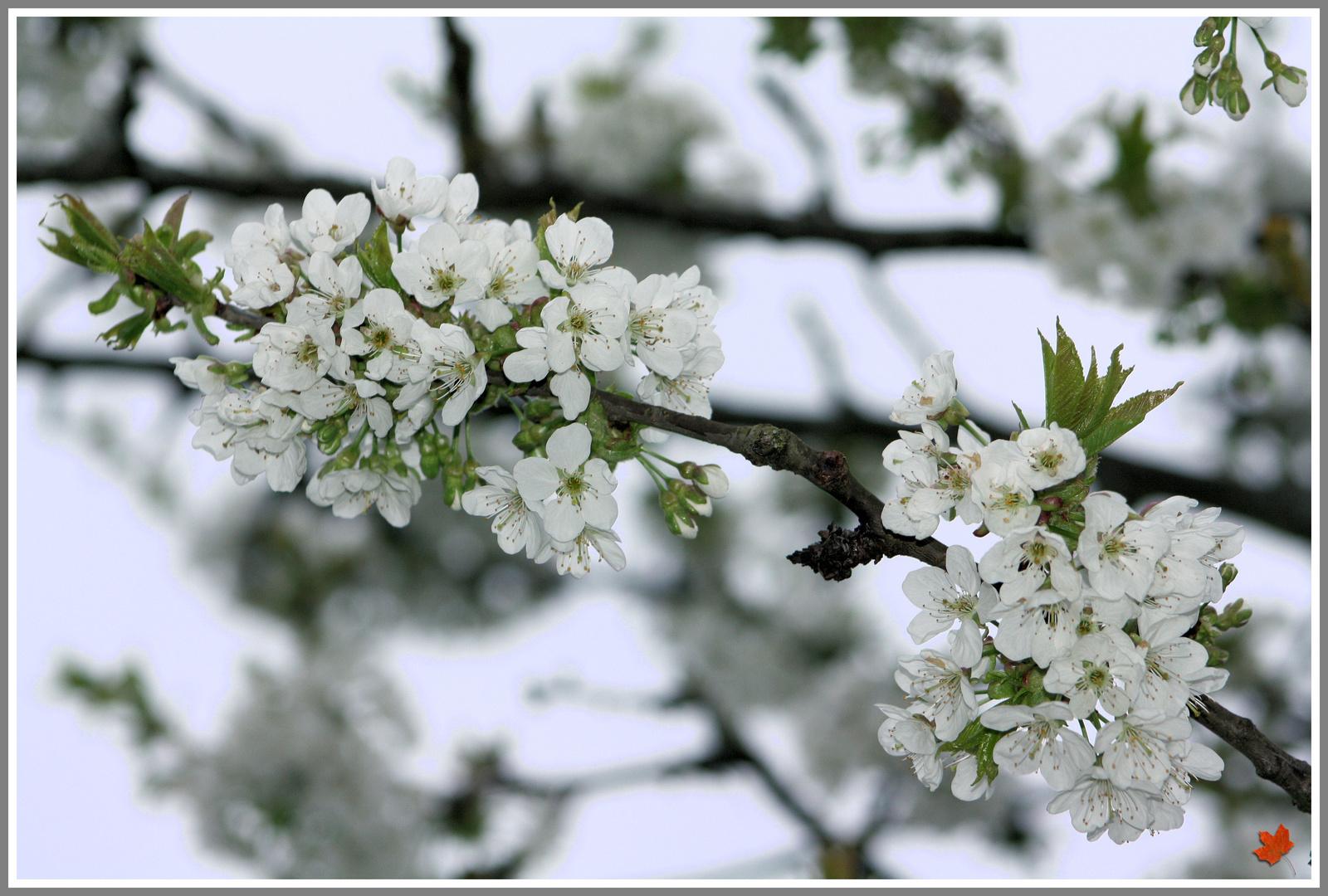 Frühling_die Zweite