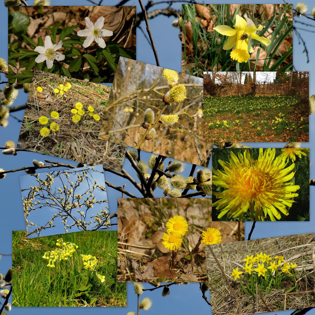 Frühling..Frühling..endlich...